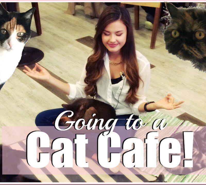 VISITING THE CAT'S ATTIC CAT CAFE IN SEOUL, KOREA THE TRAVEL BREAKDOWN