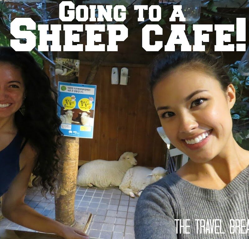 Tips for Visiting The Thanks Nature Sheep Cafe in Seoul, Korea | The Travel Breakdown